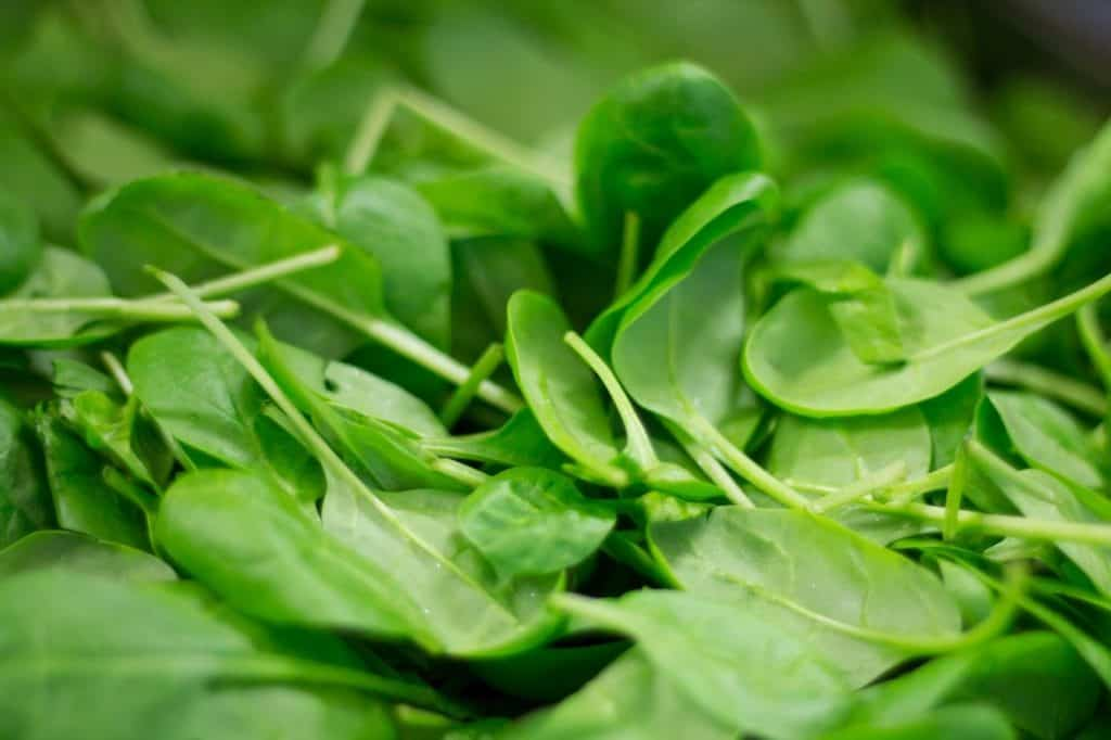 Best Conditions for Growing Spinach in Aquaponics Gardens