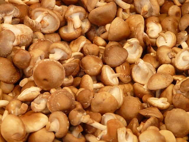 Choosing Mushroom Types To Grow in Aquaponics