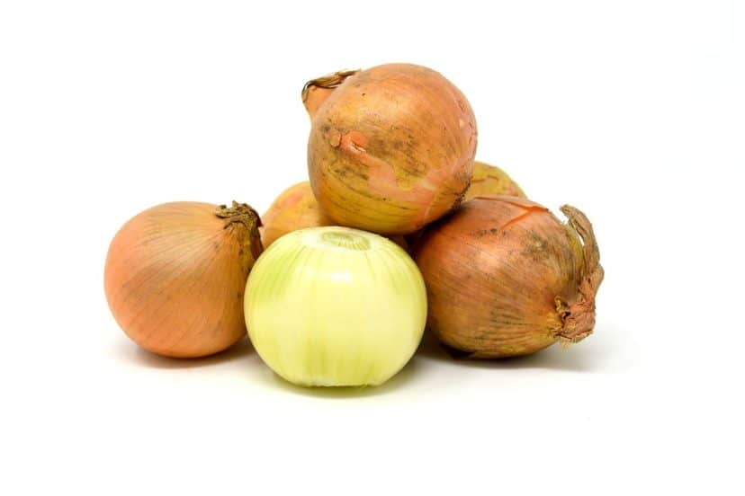 Growing Onions In Aquaponics Gardens