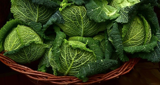 How to Grow Cabbages Aquaponically