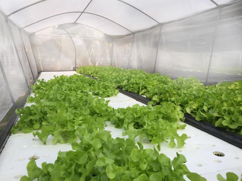 Aquaponics Protection from Rain, Snow, and Wind