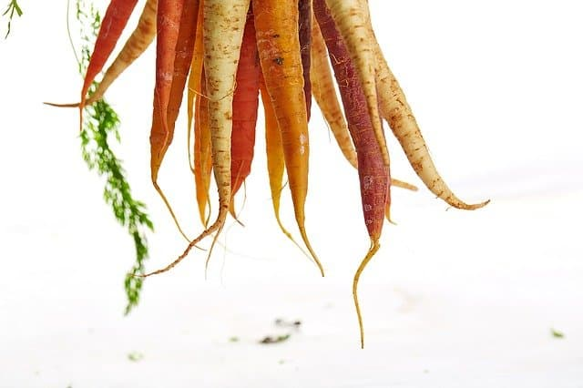 Requirements for Growing Carrots Aquaponically
