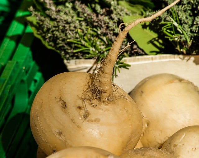 Requirements for Growing Turnip Greens in Aquaponics Gardens