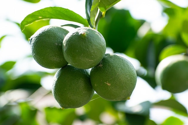 Why Should You Grow Aquaponic Limes