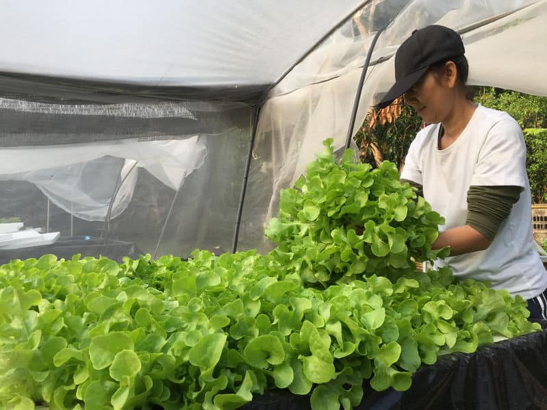 Why is Pest Management Important in Aquaponics?