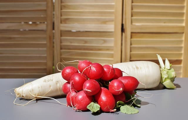 grow radishes in an aquaponics garden
