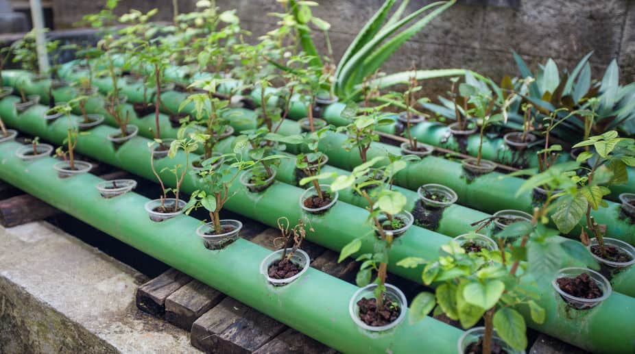 Aquaponics Organic Certification