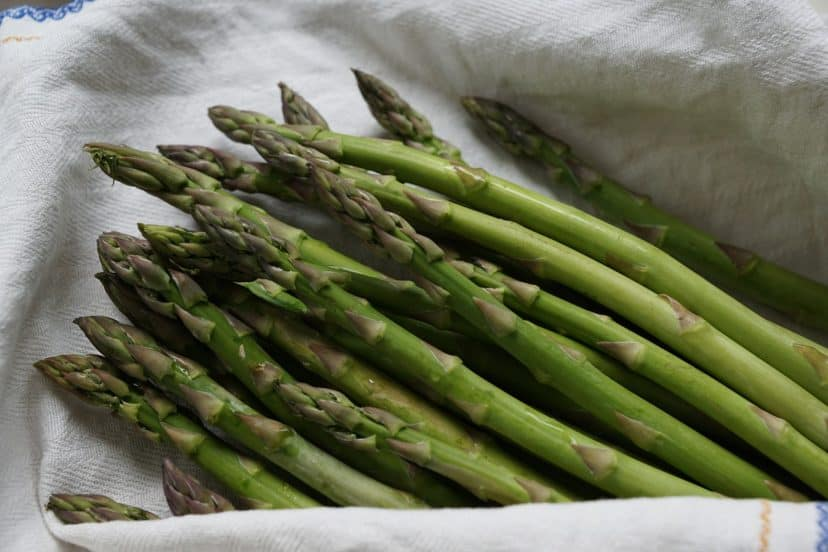 Growing Asparagus In Aquaponics Gardens