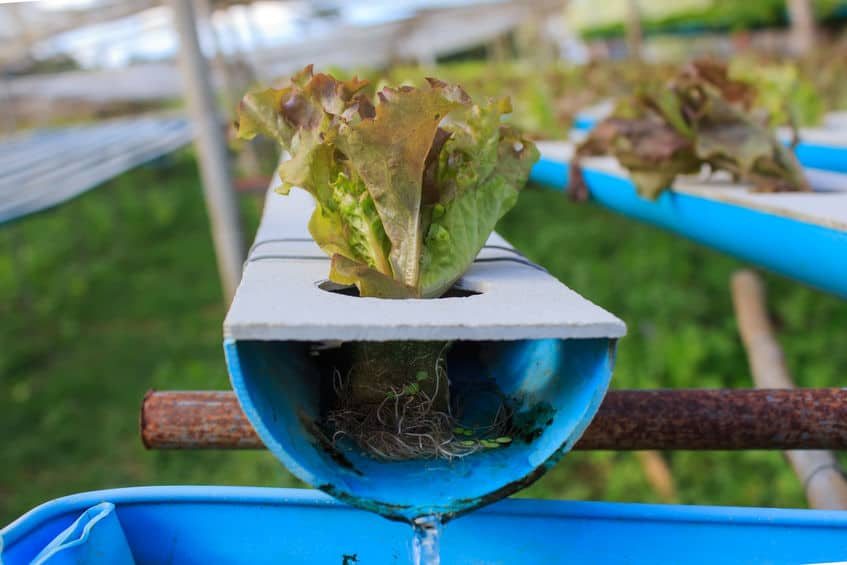 How Can Aquaponics Help With The Problem Of Poverty