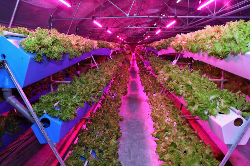 Reasons Why Aquaponics Are Important For The Future