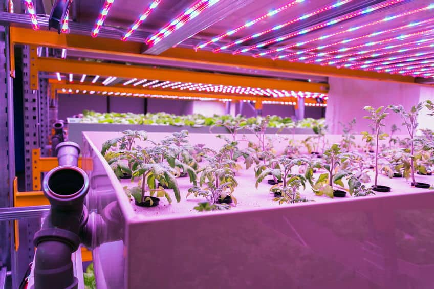 Reasons Why Aquaponics Helps the Environment