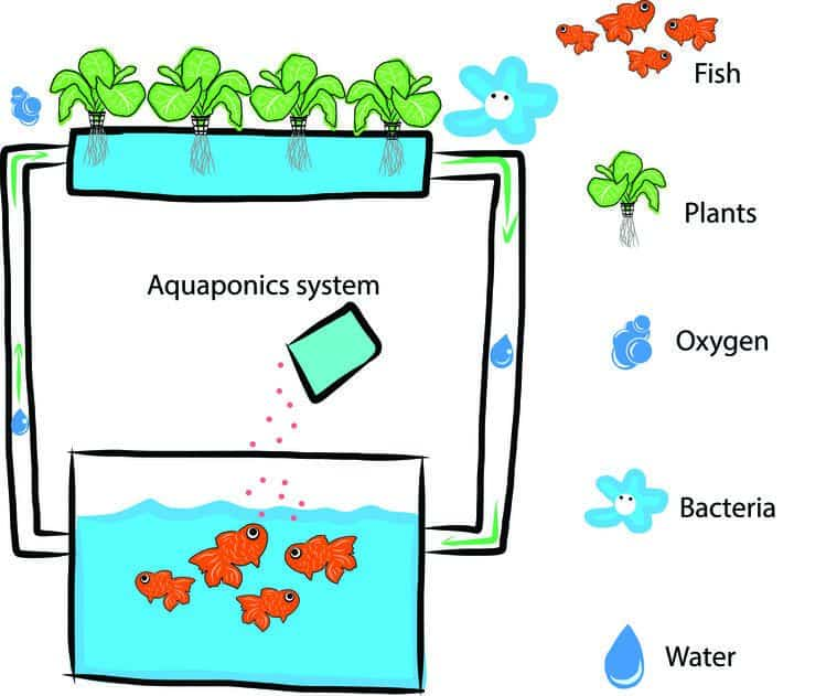 Why Air Pumps are Necessary for Aquaponics