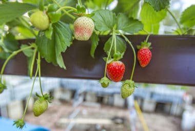 Why Aquaponics Is Important For The Future