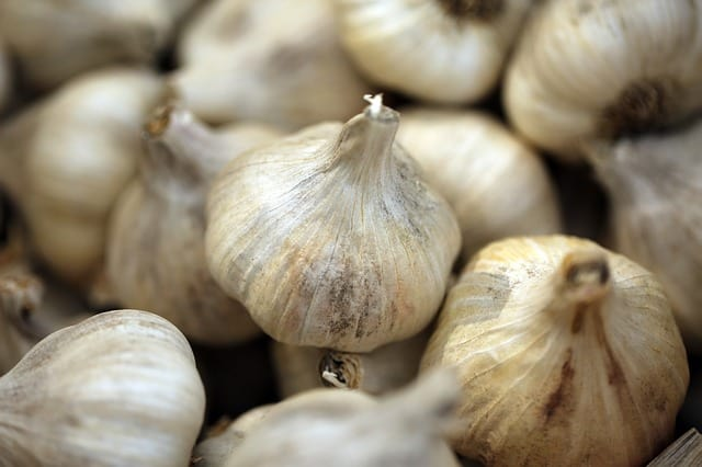 Why Grow Garlic in Your Aquaponics Garden?