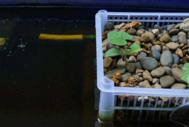 Are Water Filters Needed In Aquaponics?