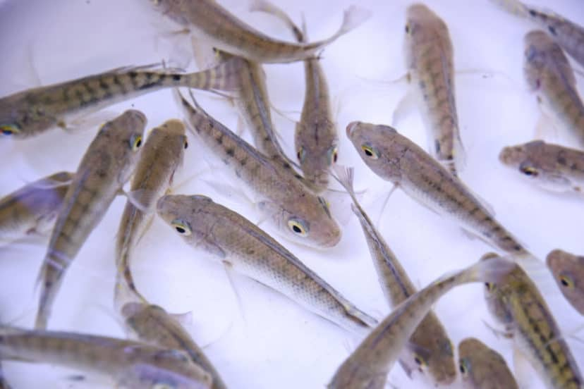 Do Fish Need Lights In Aquaponics Systems