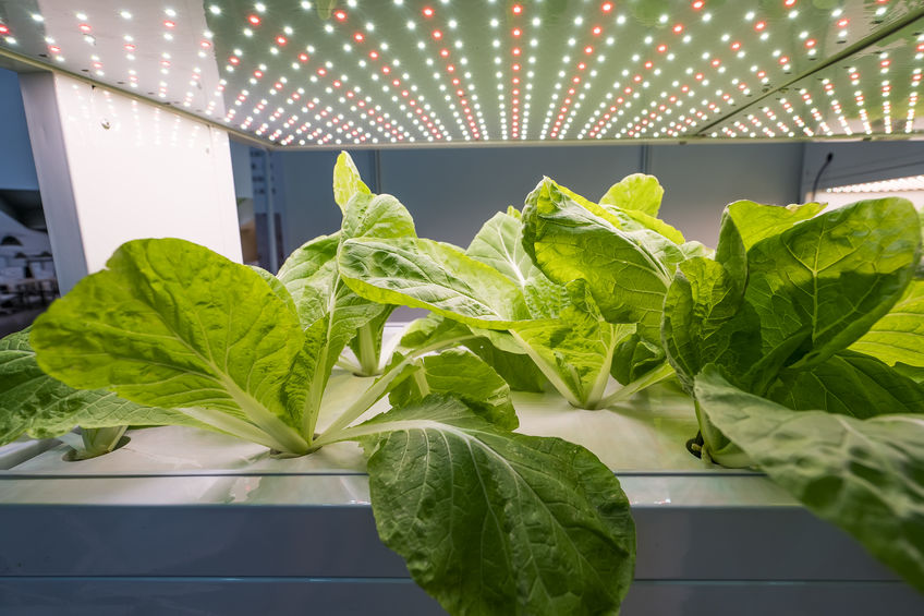 Grow lights in aquaponics