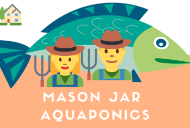 The Best Plants For Mason Jar Aquaponics