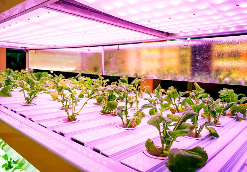 Considerations in choosing aquaponics grow lights
