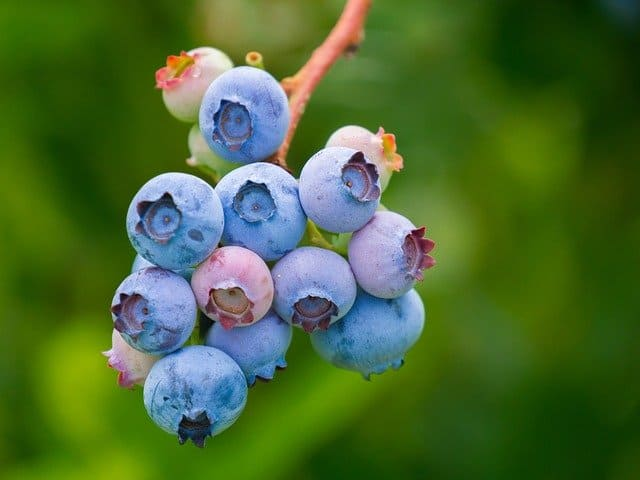 Quick Tips For Choosing The Best Berries For Aquaponics