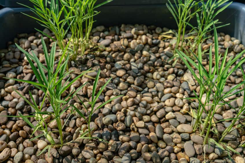 What Is humidity in aquaponics and why is it important