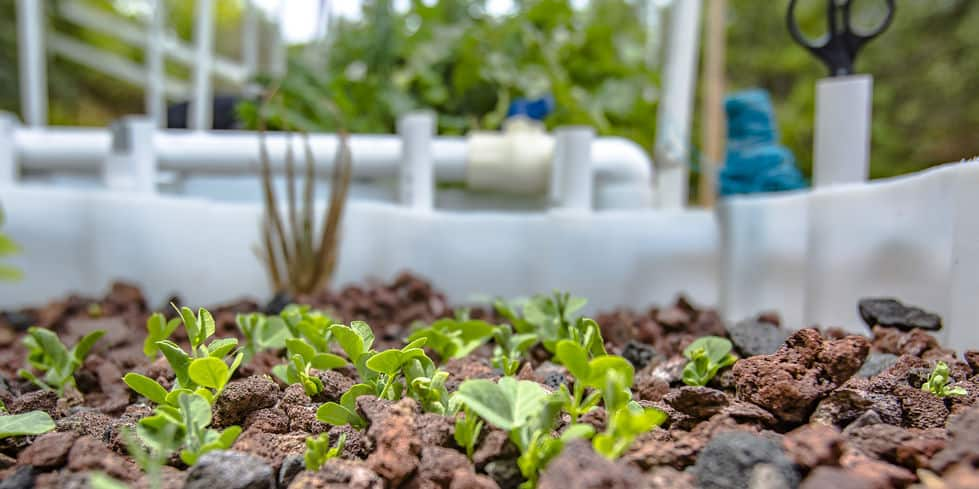 What is the best aquaponics system for beginners