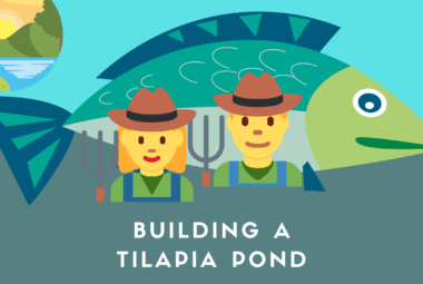 Building A Tilapia Pond