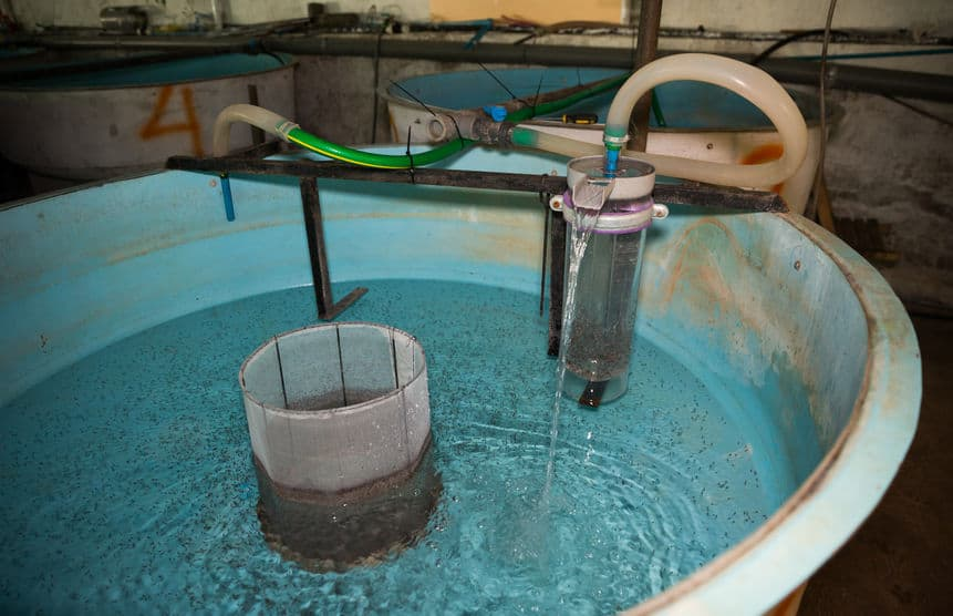 What is a tilapia hatchery