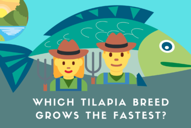 Which Tilapia Breed Grows The Fastest