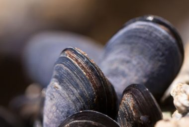 Can You Eat Raw Mussels?