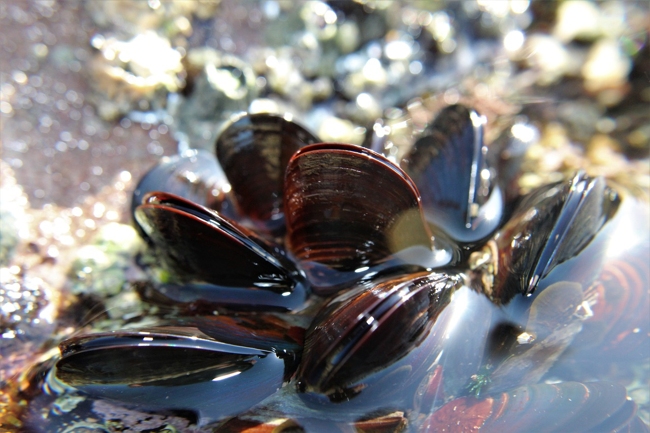 Can you get sick from eating raw mussels?