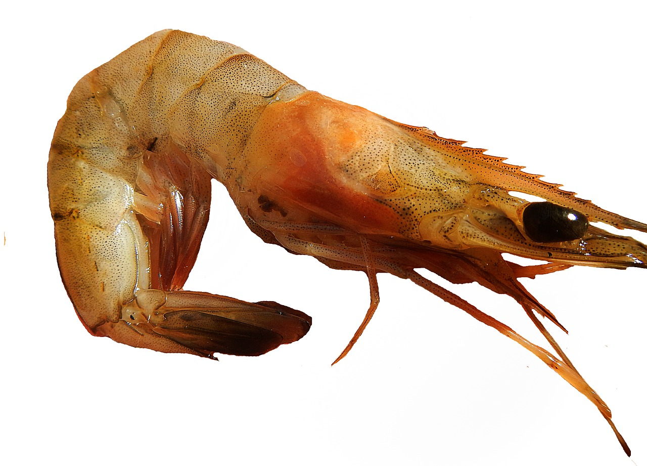 How Are Fish and Shrimp Different?