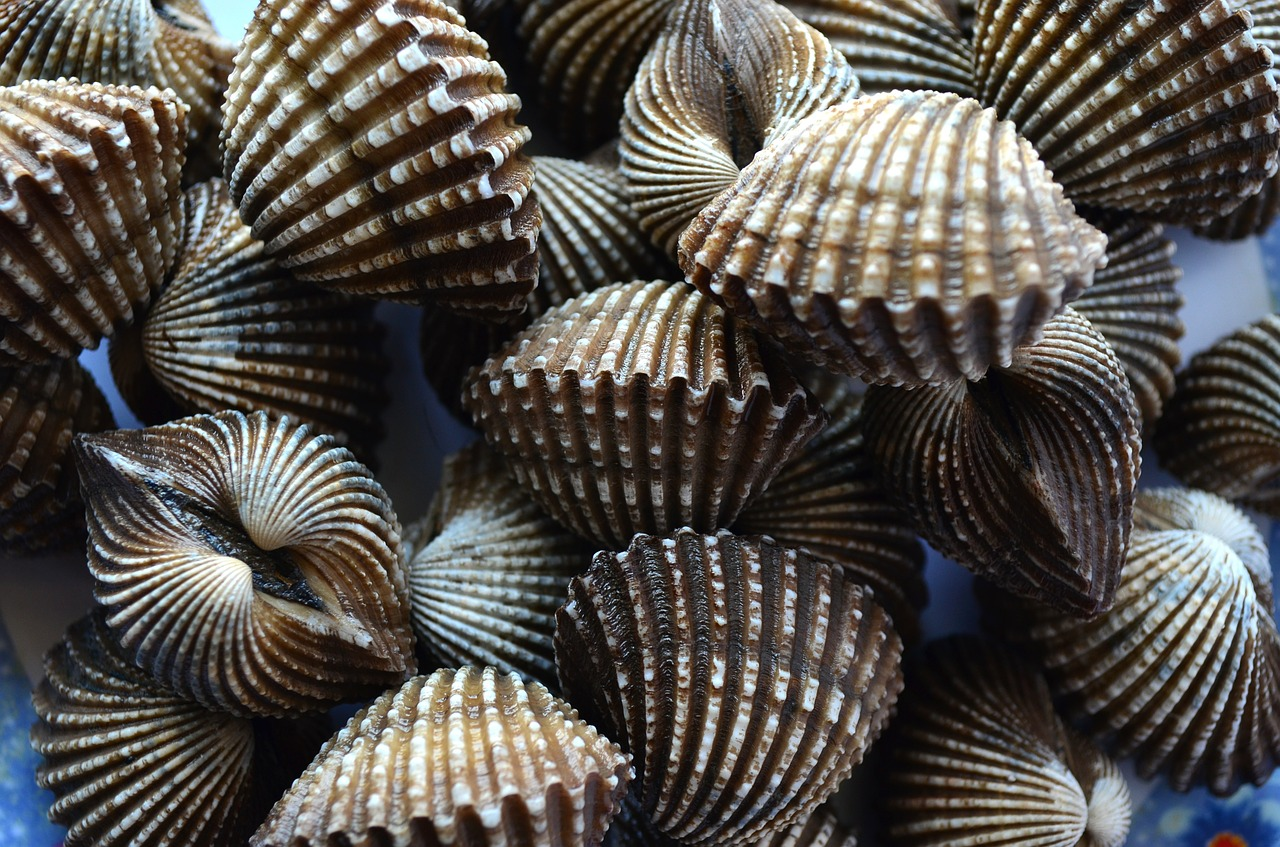 How should scallops be cooked?