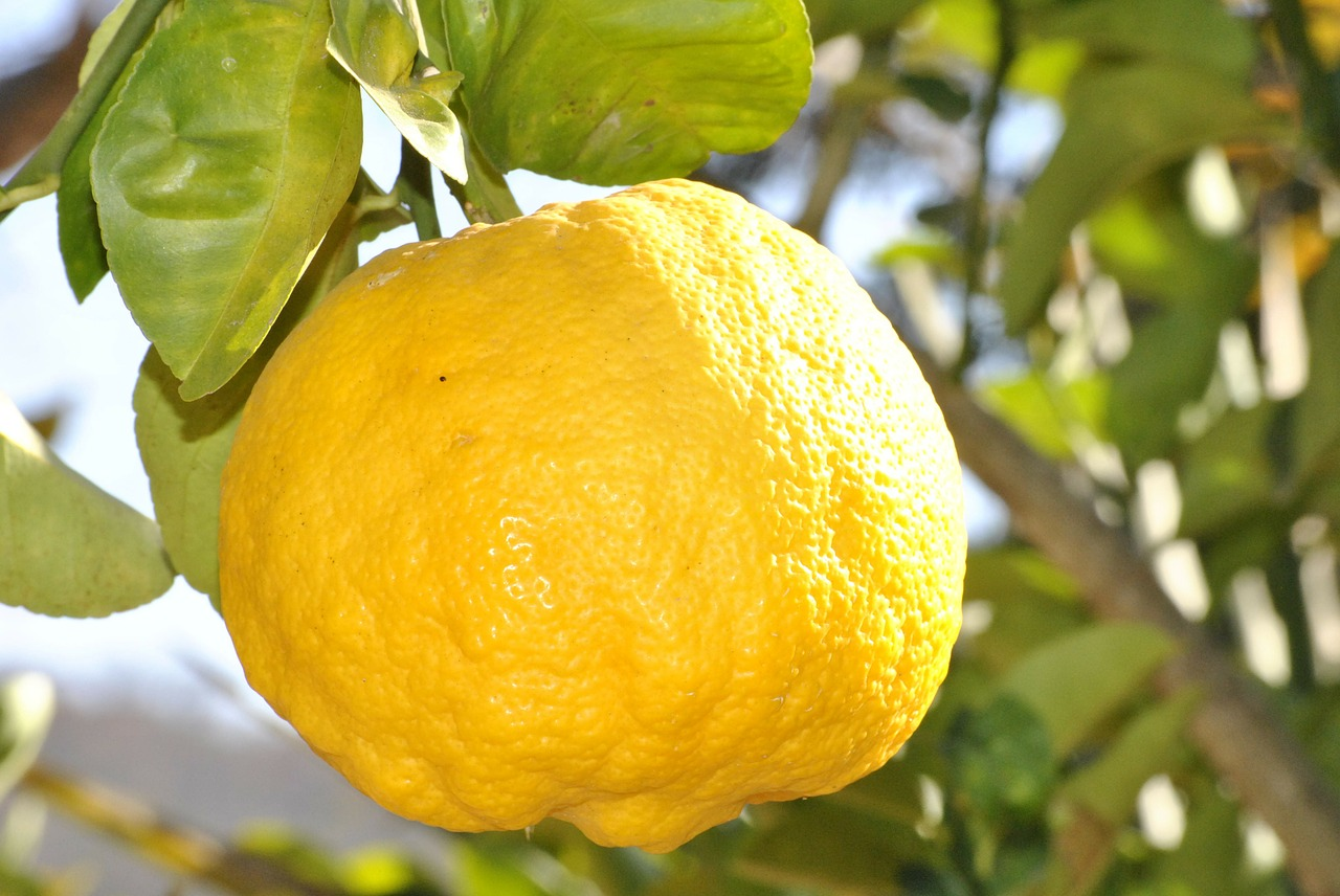 Facts About Lemons That You May Not Know About