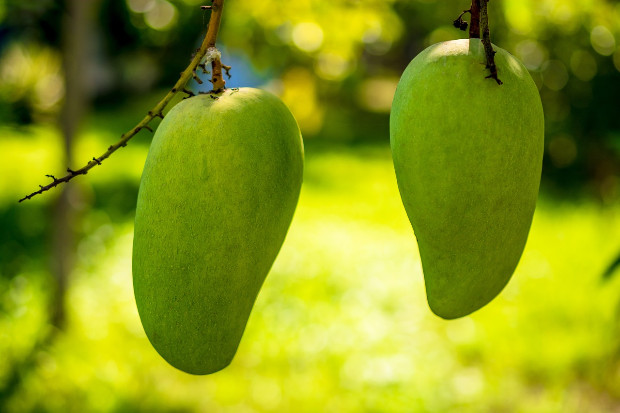 Mango as a Tropical Fruit from the Anacardiaceae family