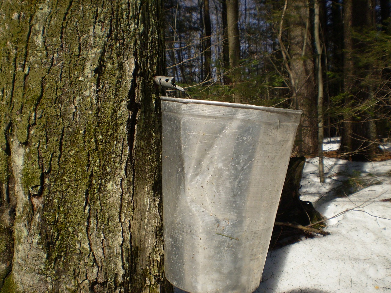 Origins of Maple Products