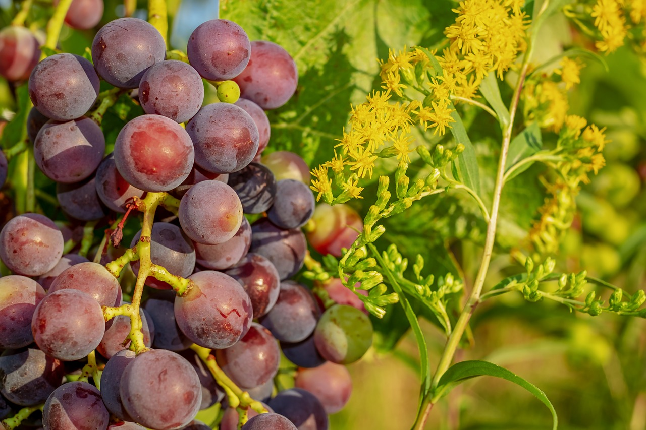 The Key Differences Between Grapes and Citrus Fruits