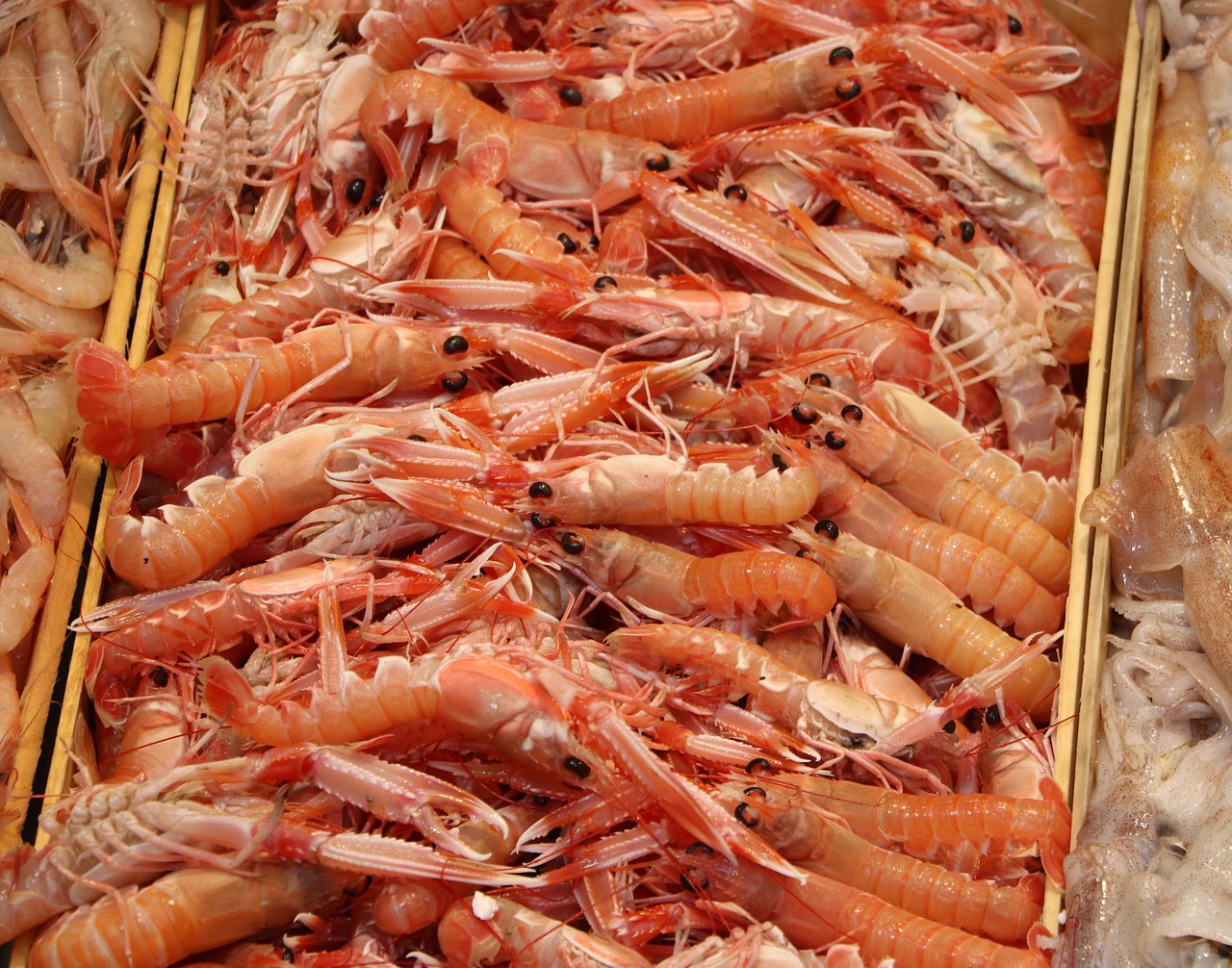 What Are the Varieties of Shrimp