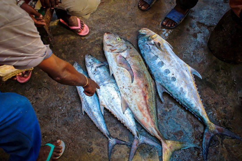 What Is The Tamil Name For Tuna Fish?