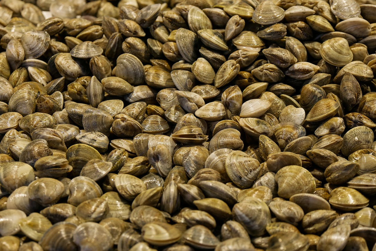 What do raw mussels taste like