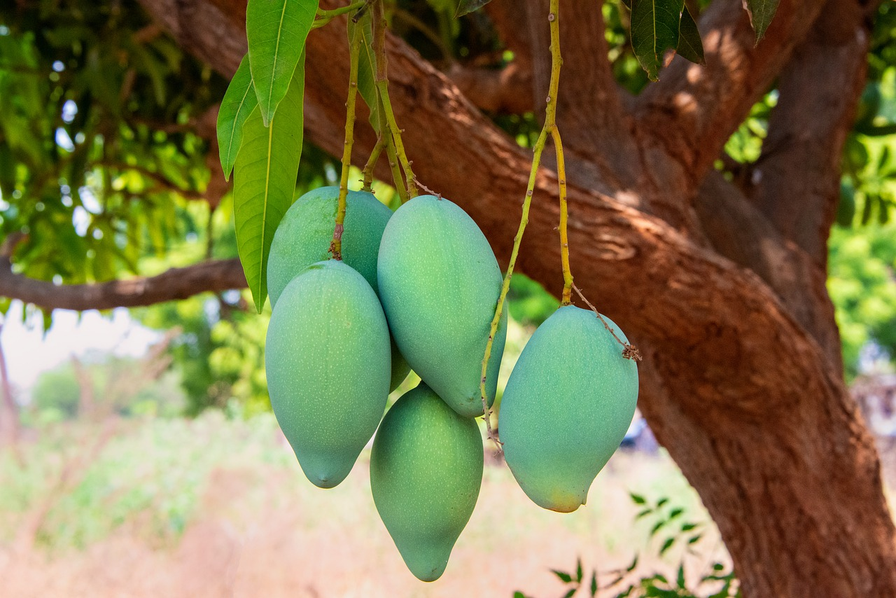 The Key Differences of Mangos and Citrus Fruits